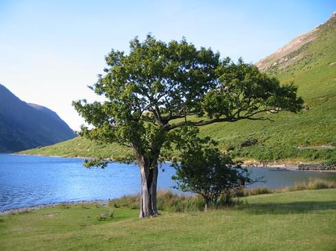 tree-psalm1